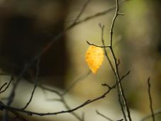 perservere leaf image