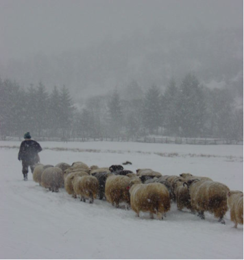 shepherdwinter